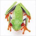 Fotografías de anfibios