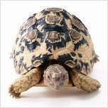 Galería imágenes reptiles