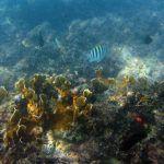 Fotografía submarina – el bello trabajo de las fotos en el agua